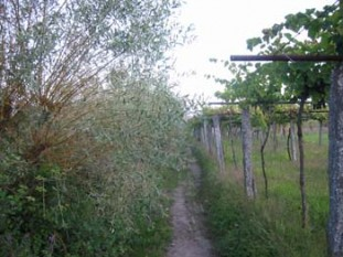 023 Delightful path through the vineyards after Briallos