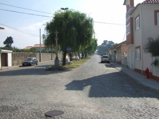 19 Tree lined avenue leading to the church in Vilar